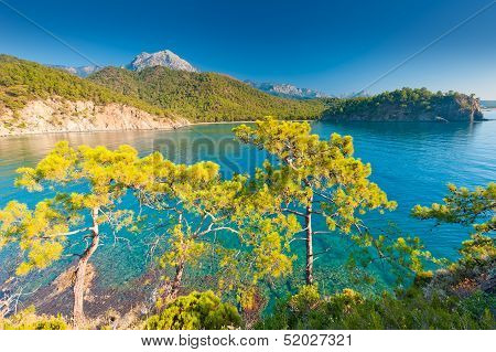 Sea Bay With Growing Pine Trees On The Mountain Slopes