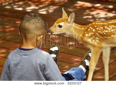 Boy And A Baby Deer
