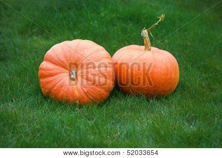 Pumpkin On Grass