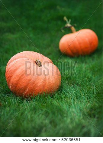 Two Pumpkins On Grass