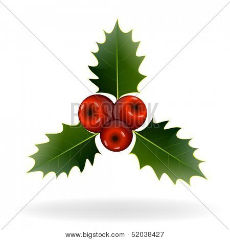 Holly berries on white background. Christmas decorations. Vector eps10 illustration