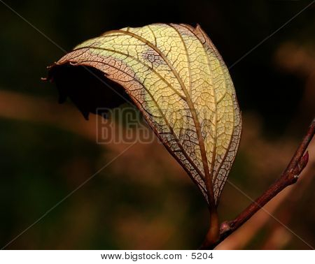 Leafcurved_20849