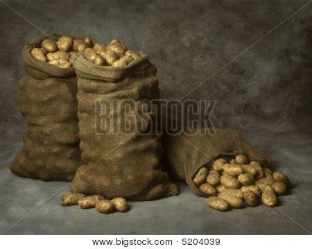 Burlap Sacks Of Potatoes