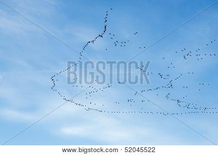 Migration Of Birds