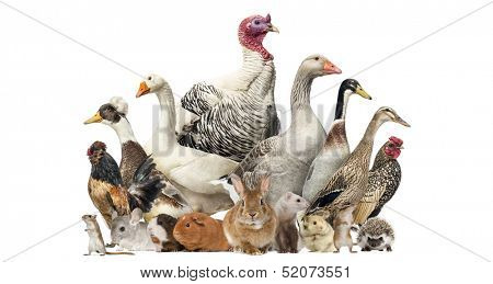 Group of farm birds and rodents, isolated on white