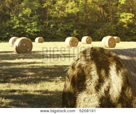 Hay Bale In The Fiedl