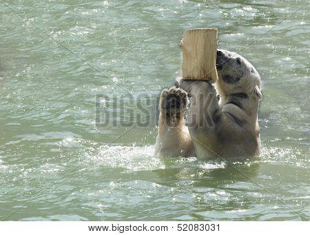 Playing Polar Bear