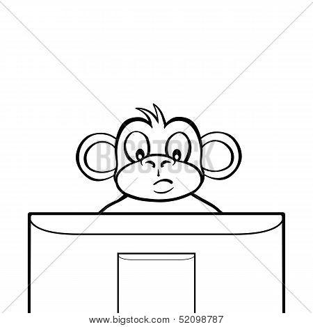 Black and white monkey behind screen
