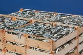 stock photo of caught  - mediterranean sardines stack of crates of freshly caught oily fish