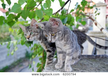 Two Gray Cats Over Green Leaves