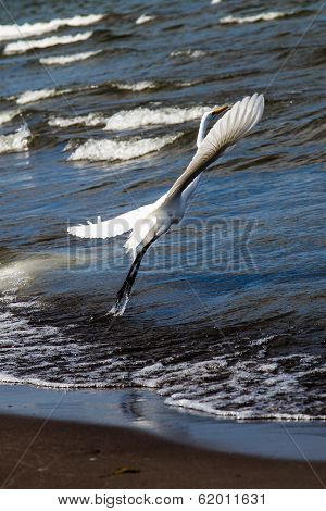 Photography Of A White Heron In Beach
