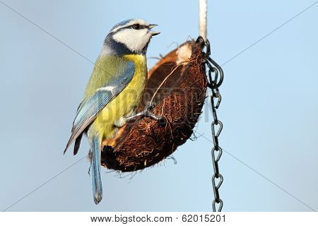Small Garden Bird On Feeder