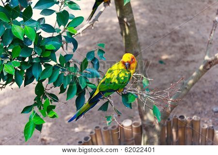 Beautiful Colorful Parrot