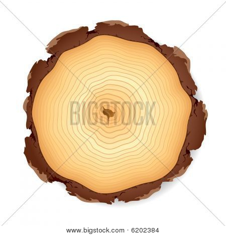Wooden cross section. Vector illustration.