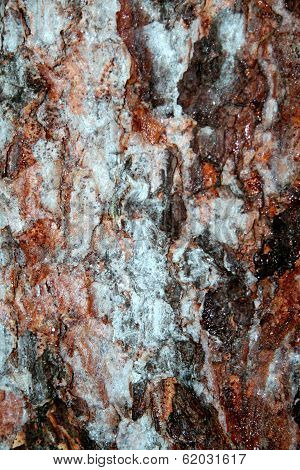 Tree bark in winter