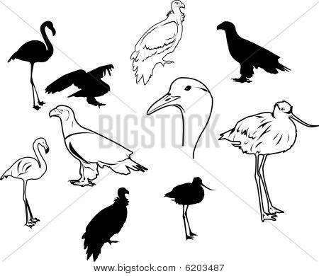 Vektor Vögel