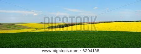 Spring Field Header