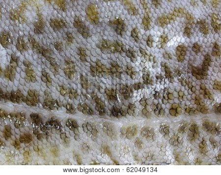 Cod Fish Skin