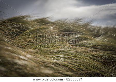 Wavy Grass