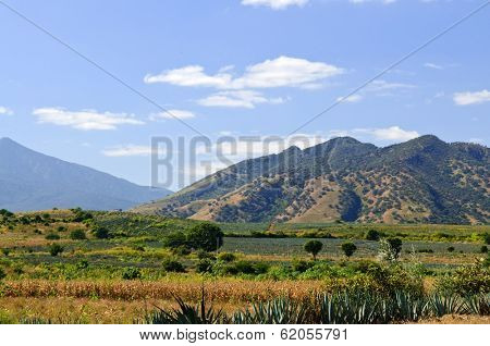 Lanscape with agave cactus fields near Tequila in Jalisco, Mexico