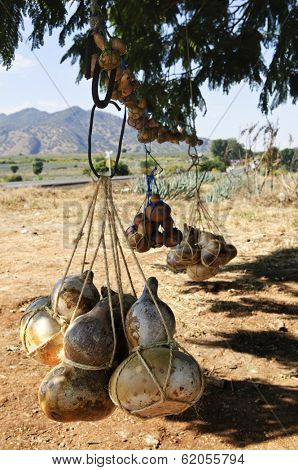 Traditional calabash gourd bottles hanging from a tree near Tequila in Jalisco, Mexico