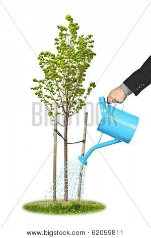 Hand of a businessman watering young tree