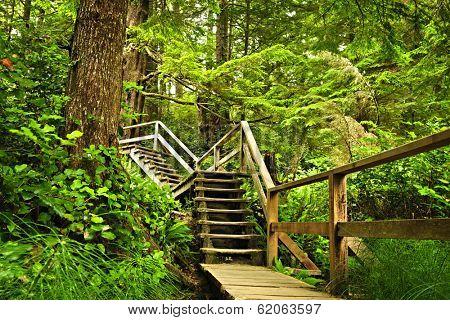 Path through temperate rain forest. Pacific Rim National Park, British Columbia Canada