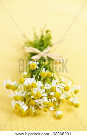 Bunch of fresh chamomile flowers on yellow background tied with bow