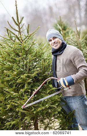 Man with saw choosing fresh Christmas trees at cut your own tree farm