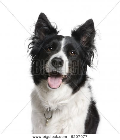 Border Collie, 7 Years Old, Sitting In Front Of White Background