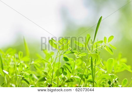 Closeup of green young sprouts growing in garden