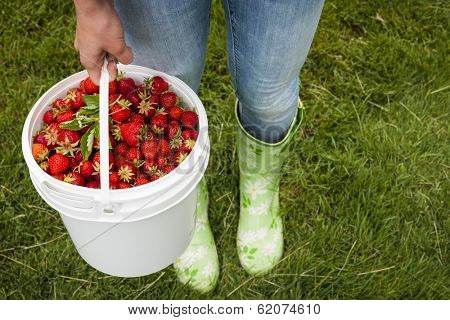 Woman holding bucket of freshly picked strawberries on green grass outside in garden
