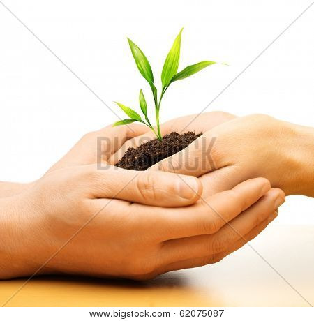 Human hands holding earth with plant sprout