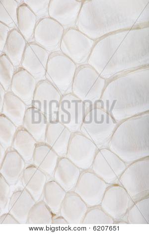 Close-up Of Squamata, Scaled Reptile Against White Background