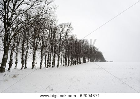 Line of trees at winter time