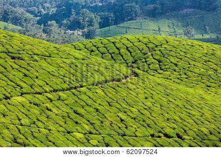 Kerala India travel background - green tea plantations in Munnar, Kerala, India - tourist attraction