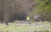 picture of deer meat  - Red deer walking in forest near watchtower - JPG