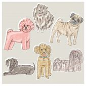 image of dog breed shih-tzu  - Set of cute little breed dogs - JPG