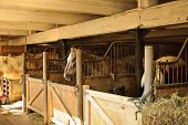 stock photo of stable horse  - Horse stables with wooden doors and horses - JPG