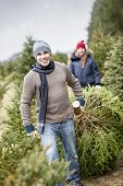 image of cutting trees  - Man dragging fresh spruce at cut your own Christmas tree farm with his daughter in background - JPG