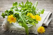 stock photo of edible  - Foraged edible dandelion flowers and greens in bowl - JPG