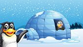 picture of igloo  - Illustration of the penguins and the igloo - JPG