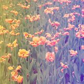 image of instagram  - Flowers with instagram effect - JPG