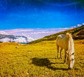 pic of himachal  - Vintage retro hipster style travel image of serene landscape background  - JPG