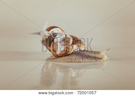 snail, Bright, shell, sticky