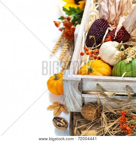 Autumn composition ( pumpkins and corn on old wooden table). Thanksgiving day concept