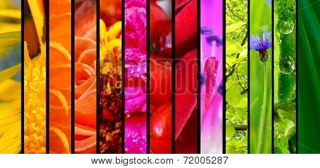 Beautiful Nature Colorful Collage