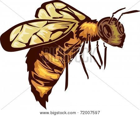 Illustration Featuring a Bee