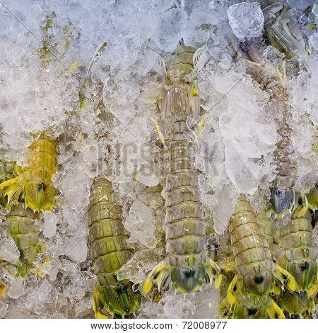 Mantis Shrimp With Ice In Fresh Market In Thailand