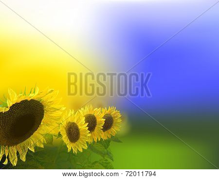 Glorious morning background with Sunflowers